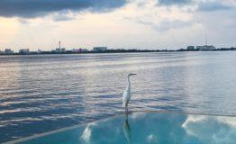 Depto-Torre Dorada-Renta-Vista mar desde alberca